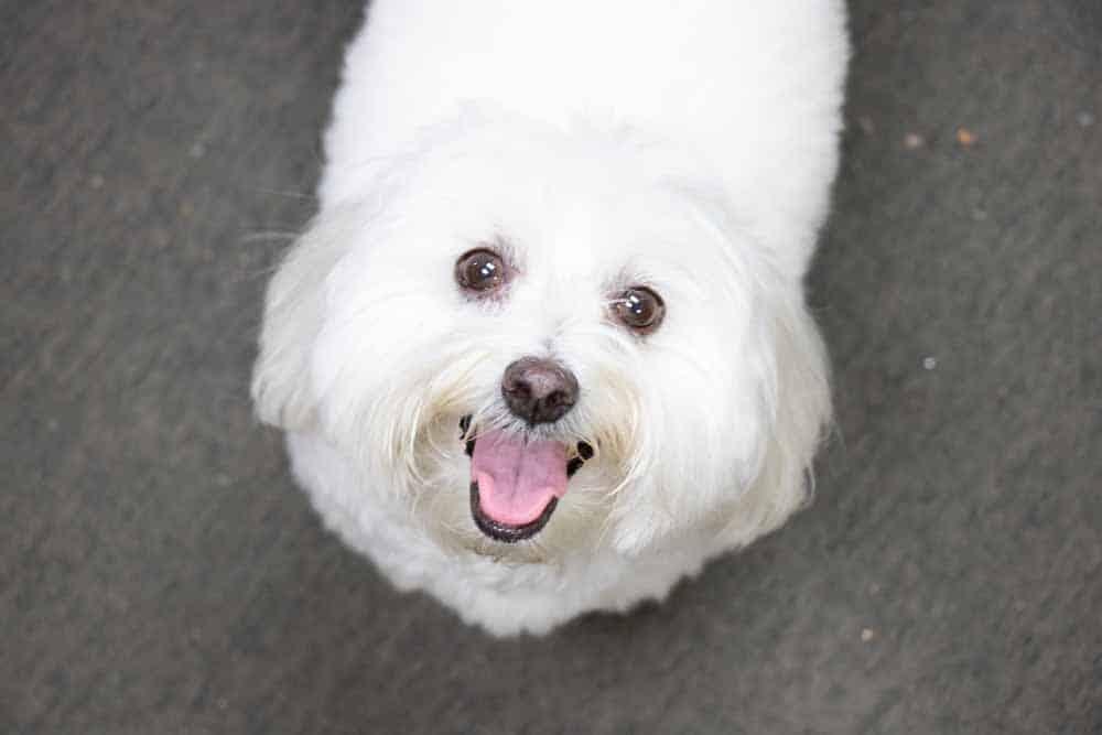 Medalcraft Mint dog